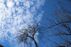 Boom met blauwe hemel in mijn organische tuin royalty-vrije stock afbeelding