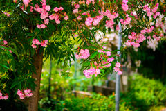 Boom met bloemen Royalty-vrije Stock Foto