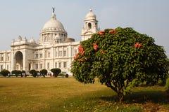 Boom met bloemen dichtbij het gedenkteken van Victoria in park in kolkatta India stock foto