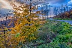 Boom met de aardige bladeren van de de herfstkleur Royalty-vrije Stock Afbeeldingen