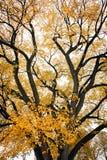 Boom met de herfstkleur in Vooruitzichtpark, de Stad van Brooklyn, New York royalty-vrije stock foto