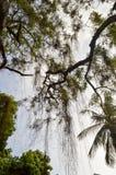 Boom met een dalende tak in een park Stock Afbeeldingen