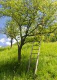 Boom met een ladder stock foto's