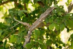 Boom met een ongebruikelijke boomstam stock foto