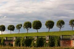 boom met een sferisch oud wijf op een groene open plek royalty-vrije stock foto's