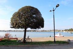 Boom met fiets en lamppost door het overzees Royalty-vrije Stock Afbeeldingen