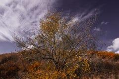 Boom met gele bladeren in helder herfstlandschap Stock Fotografie