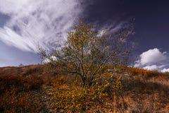 Boom met gele bladeren in helder herfstlandschap Royalty-vrije Stock Foto