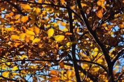 Boom met gele en oranje bladeren tegen blauwe hemel Royalty-vrije Stock Afbeeldingen