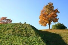 Boom met Gouden bladeren op een groene heuvel onder een blauwe hemel stock afbeeldingen