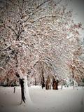 Boom met gouden die bladeren met sneeuw worden behandeld stock afbeeldingen