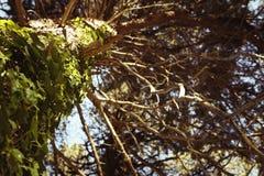 Boom met groene bladeren Royalty-vrije Stock Afbeeldingen