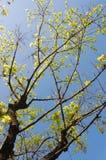 Boom met groene bladeren Stock Foto's
