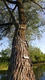 Boom met houten stappen Stock Afbeeldingen