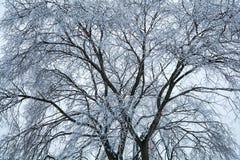 Boom, met ijs en de natuurlijke achtergrond die van de vorstwinter wordt behandeld Royalty-vrije Stock Foto's