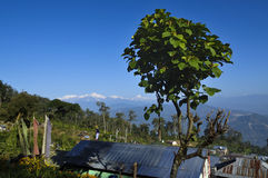Boom met Kanchenjugha-Bergketen, Sikkim Stock Fotografie