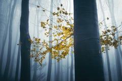 Boom met kleurrijke gele bladeren in geheimzinnig bos met mist stock fotografie