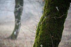 boom met mos op wortels in een groen bos of mos op boomboomstam Boomschors met groen mos De aard van Azerbeidzjan royalty-vrije stock afbeeldingen