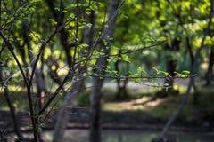 boom met mos op wortels in een groen bos of mos op boomboomstam Boomschors met groen mos De aard van Azerbeidzjan stock afbeeldingen