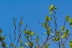Boom met nieuwe bladeren royalty-vrije stock afbeelding
