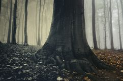 Boom met reuzewortels in surreal griezelig bos met mist royalty-vrije stock afbeelding