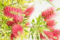 Boom met rode bloemen royalty-vrije stock foto