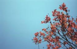 Boom met rood gebladerte tegen een blauwe hemel royalty-vrije stock foto's