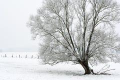 Boom met sneeuw Royalty-vrije Stock Fotografie