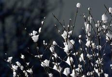 Boom met sneeuw stock foto's