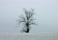 Boom met sneeuw Stock Afbeeldingen