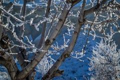 Boom met Sneeuw, Capadoccia, Turkije wordt behandeld dat Royalty-vrije Stock Afbeelding