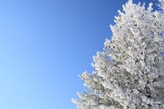 Boom met sneeuw wordt behandeld die Royalty-vrije Stock Fotografie