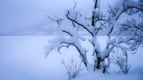 Boom met sneeuw wordt behandeld die Stock Afbeelding
