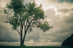 Boom met stormachtige wolken Royalty-vrije Stock Fotografie