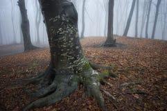Boom met witte vlekken in een bos in de herfst Stock Afbeeldingen