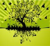 boom met wortel Stock Afbeeldingen