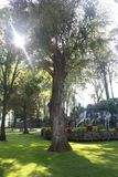 Boom met zonneschijn bij het park Stock Afbeeldingen