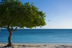 Boom naast het Mooie Strand van Aruba ` s Stock Foto