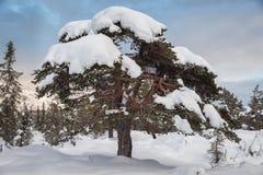 Boom onder de sneeuw Royalty-vrije Stock Fotografie