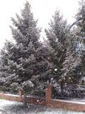 Boom onder de sneeuw stock afbeelding