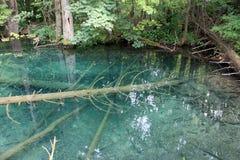 Boom onder water Stock Foto's