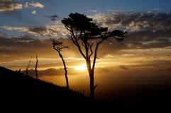 Boom op blauwe hemel en zonsondergangachtergrond stock afbeeldingen