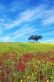 Boom op bloemrijk gebied stock afbeeldingen