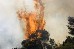 Boom op brand Stock Foto's