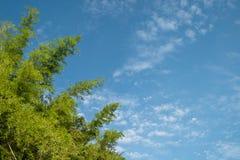Boom op de achtergrond van de wolkenhemel Royalty-vrije Stock Afbeelding