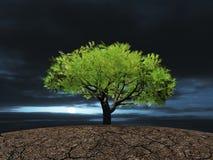 Boom op de gebarsten droge grond Stock Fotografie