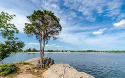 Boom op de kust van Connecticut royalty-vrije stock afbeeldingen