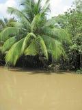 Boom op de Mekong Delta Stock Foto's