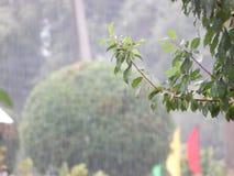 Boom op de regen Stock Fotografie