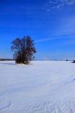 Boom op de sneeuw fileld Stock Afbeeldingen